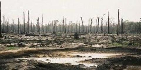 Ausgelaufenes Öl zerstört in Nigeria die Lebensgrundlage der Bevölkerung  © AI