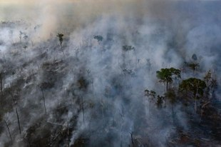 Die Versäumnisse der Regierung schüren die verheerenden Waldbrände