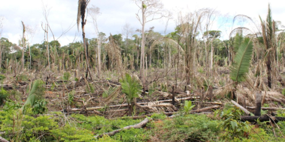 Gerodetes Gebiet bei der Siedlung Gedeão in Sul de Lábrea, Amazonas, Brasilien © Ana Aranha, A Publica