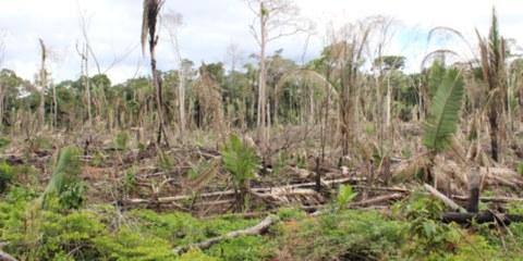 Drohendes Blutvergiessen im Amazonasgebiet