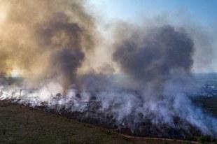 Ermittlungen gegen die Verantwortlichen für die Zerstörung des Amazonas gefordert