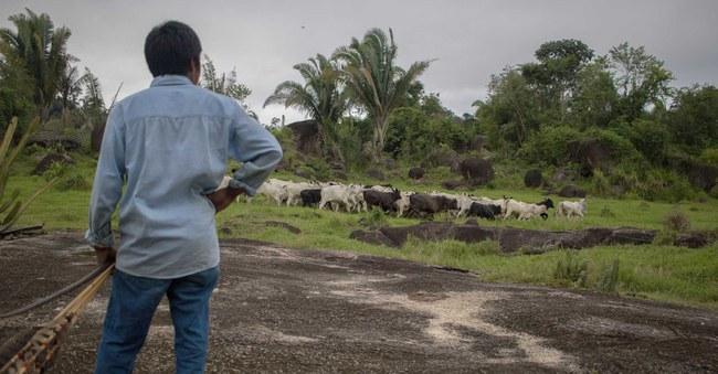 200713_261965_Brazil---illegal-land-seizures-in-Indigenous-territories.jpg