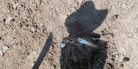 Schatten eines Bauern, der aus El Tamarindo vertrieben wurde, Dezember 2013 © Amnesty International