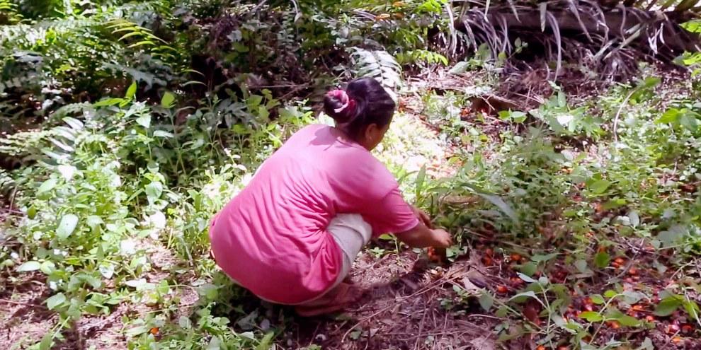 Die Arbeit in den Palmölplantagen ist hart und schlecht bezahlt. © Amnesty International / WatchDoc