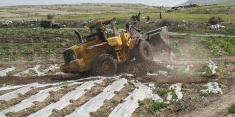 Bulldozer der israelischen Armee bei der Zerstörung eines bewässerten palästinensischen Feldes © Shabtai Gold/IRIN
