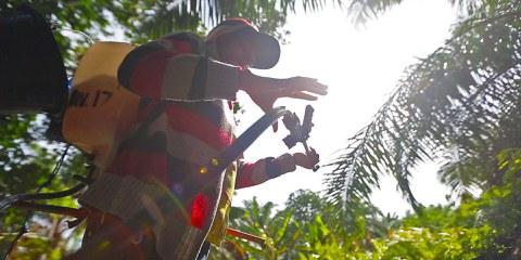 Bei der Palmöl-Produktion werden diverse Chemikalien eingesetzt – ohne dass die ArbeiterInnen die entsprechende Schutzbekleidung erhalten. © Amnesty International. WEITERE BILDER DURCH KLICKEN AUFS FOTO.