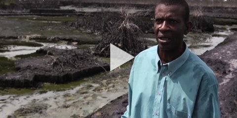 The True Tragedy: Bodo Oil Spills