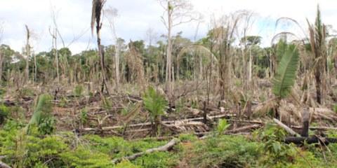 Zone défrichée près de la colonie de Gedeão, Sul de Lábrea, Amazonas, Brésil © Ana Aranha, A Publica