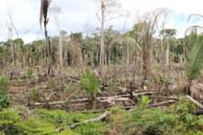 Risque d'effusion de sang en Amazonie