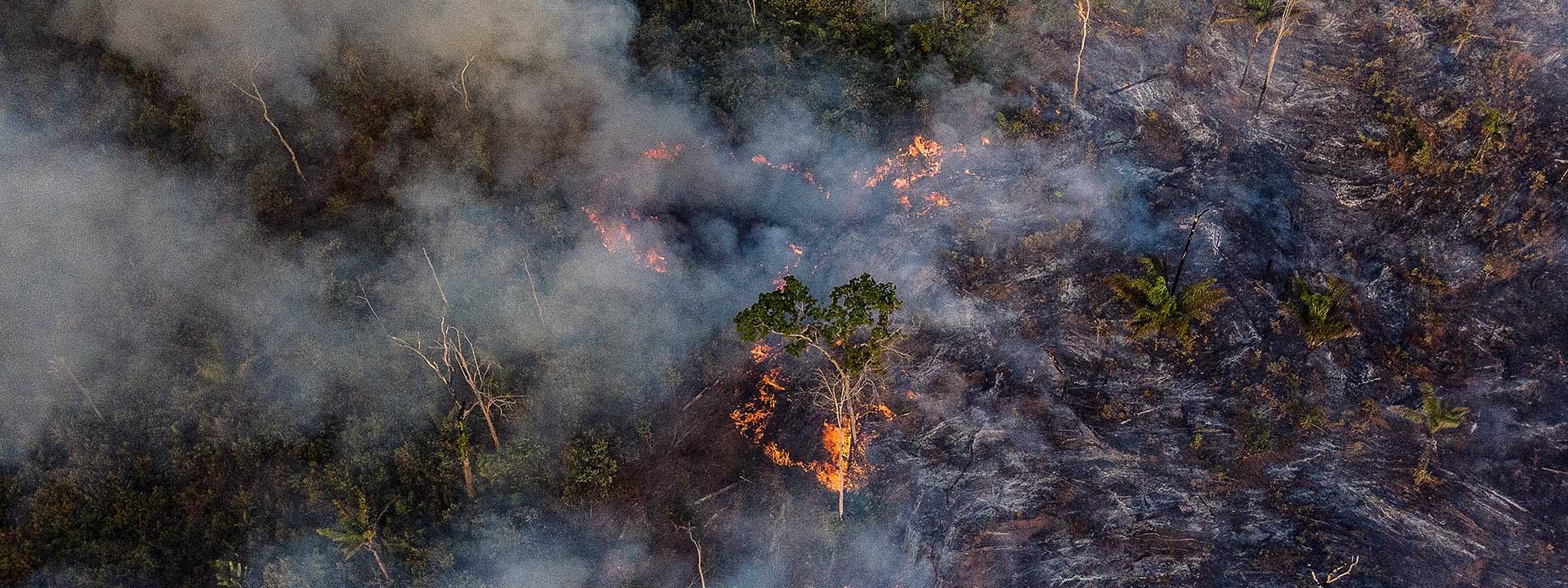 Photographie de la forêt amazonienne prise par un drone. © Anthony Cole / Amnesty International