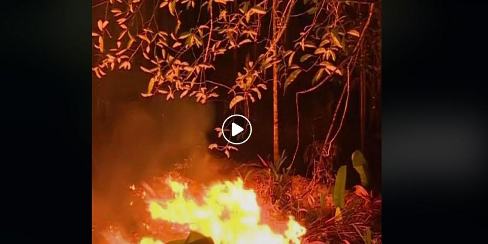Du bétail élevé illégalement en Amazonie