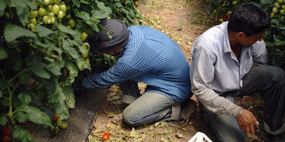 Les travailleurs migrants originaires d'Inde sont facilement victimes d'abus. © Valerio Rinaldi