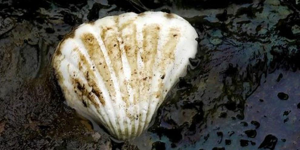 Shell n'a pas respecté les droits humains et la protection de l'environnement lors de l'exploitation pétrolière au Nigeria. @ AI