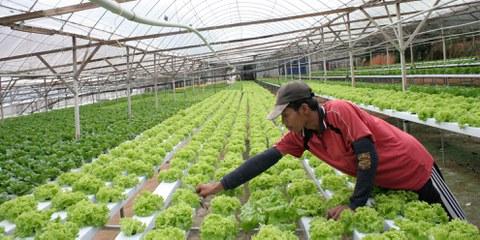 Migrant travaillant dans des plantations de Cameron en Malaisie. © Amnesty International