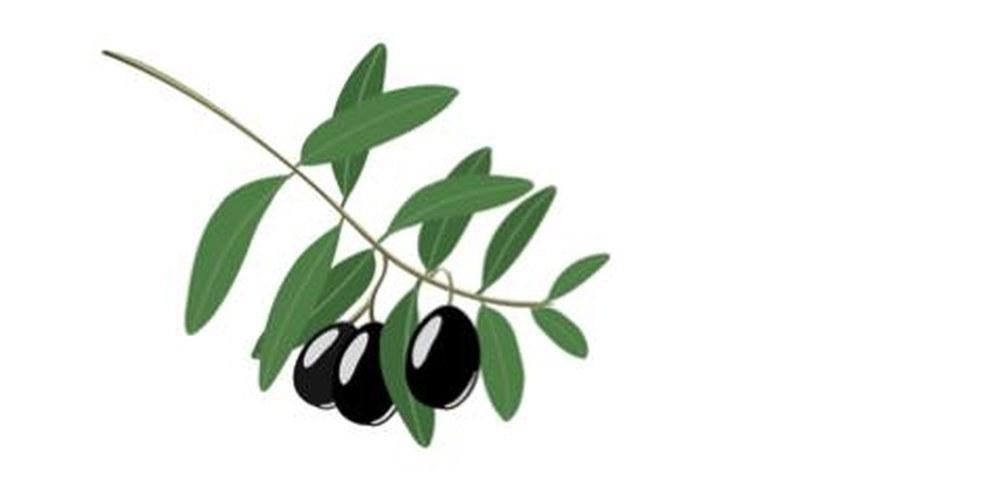 Un ramo d'ulivo come segno di solidarietà  © istockphoto.com